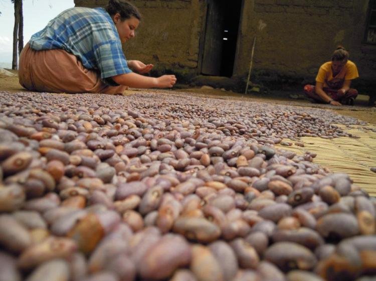 sorting beans